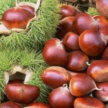 c9f75-chestnut